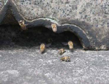 蜜蜂の巣を発見