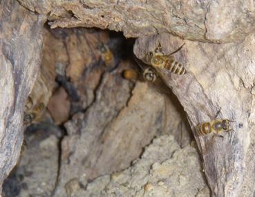 2個目の巣